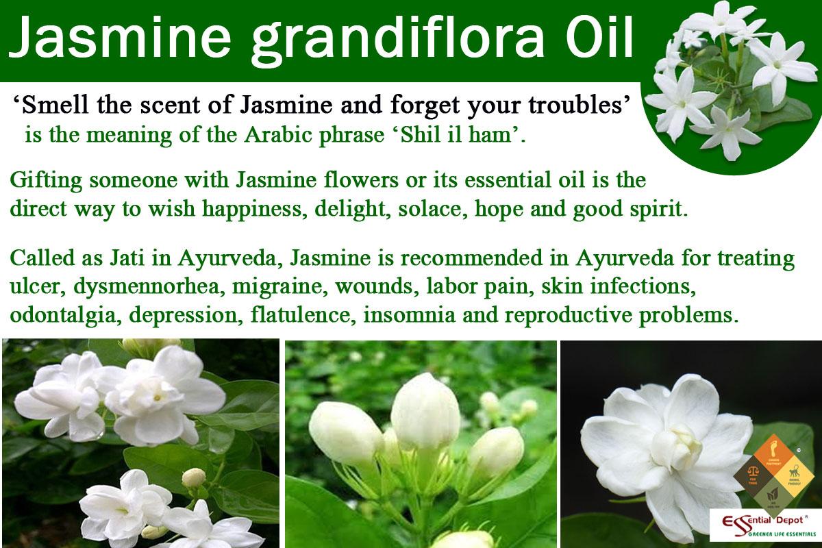 jasmine-banner