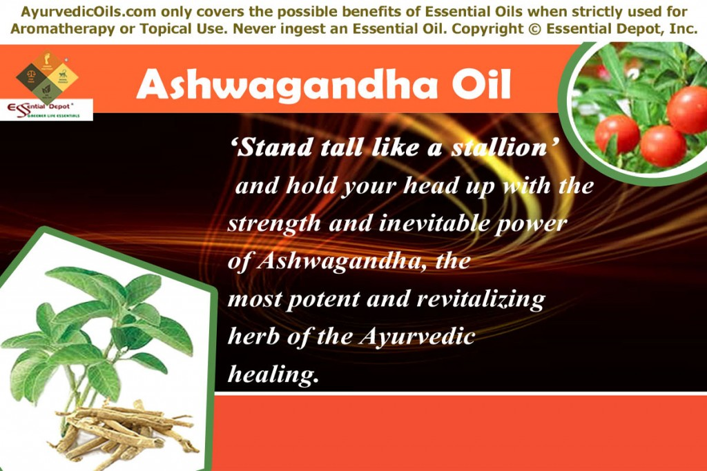 Aswagandha-banner