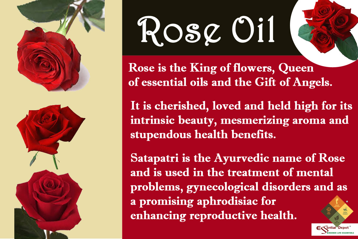 Rose-oil-Banneer