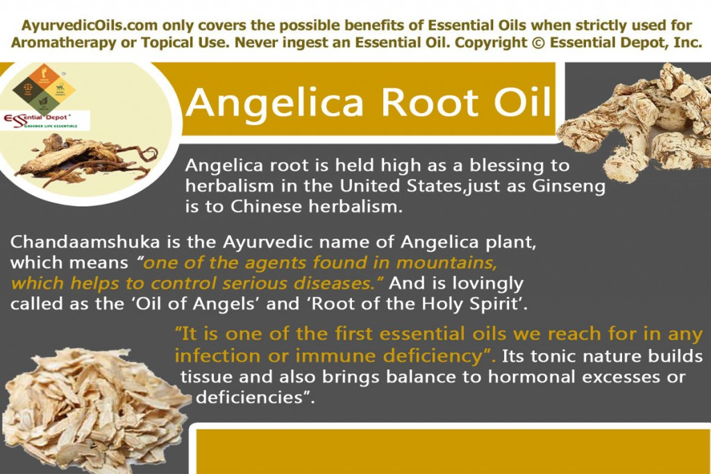 angelica-root-banner