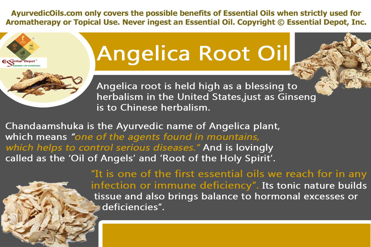 Angelica Root Oil   Essential Oil