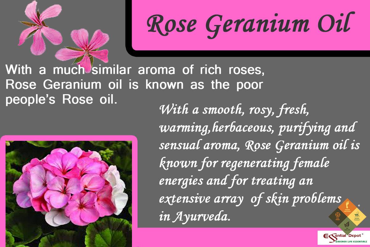 rose-germ-banner
