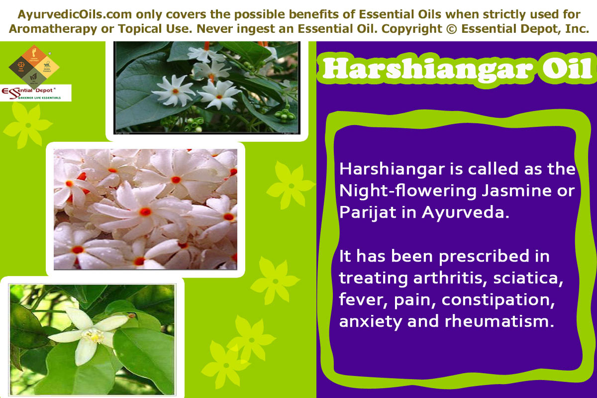 Parijat essential oil harshiangar oil izmirmasajfo