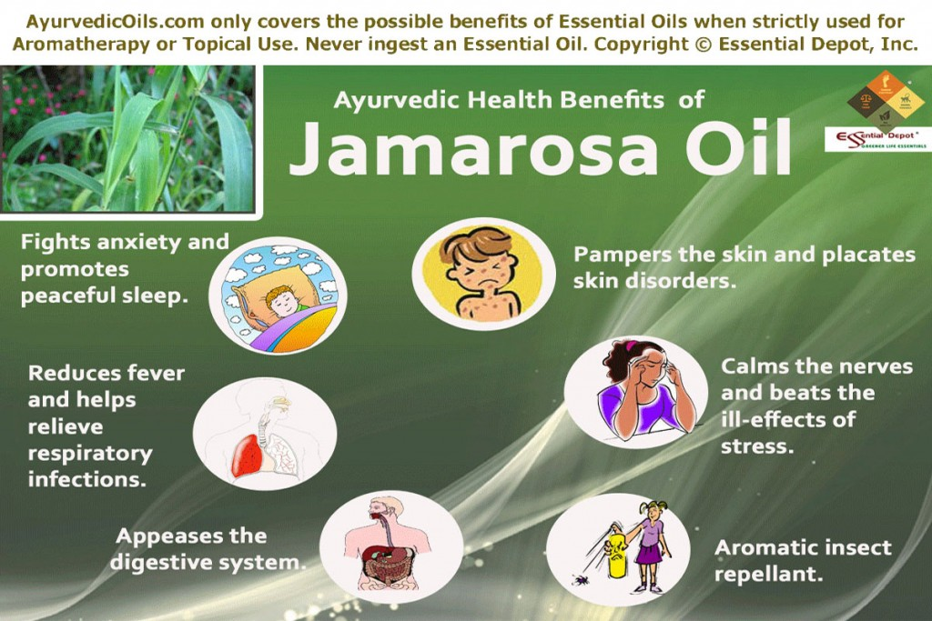 Jamarosa-broucher