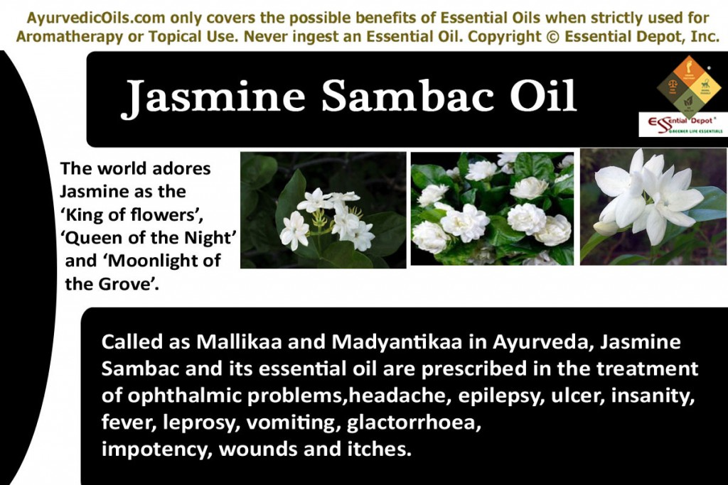 Jasmine-sambac-banner