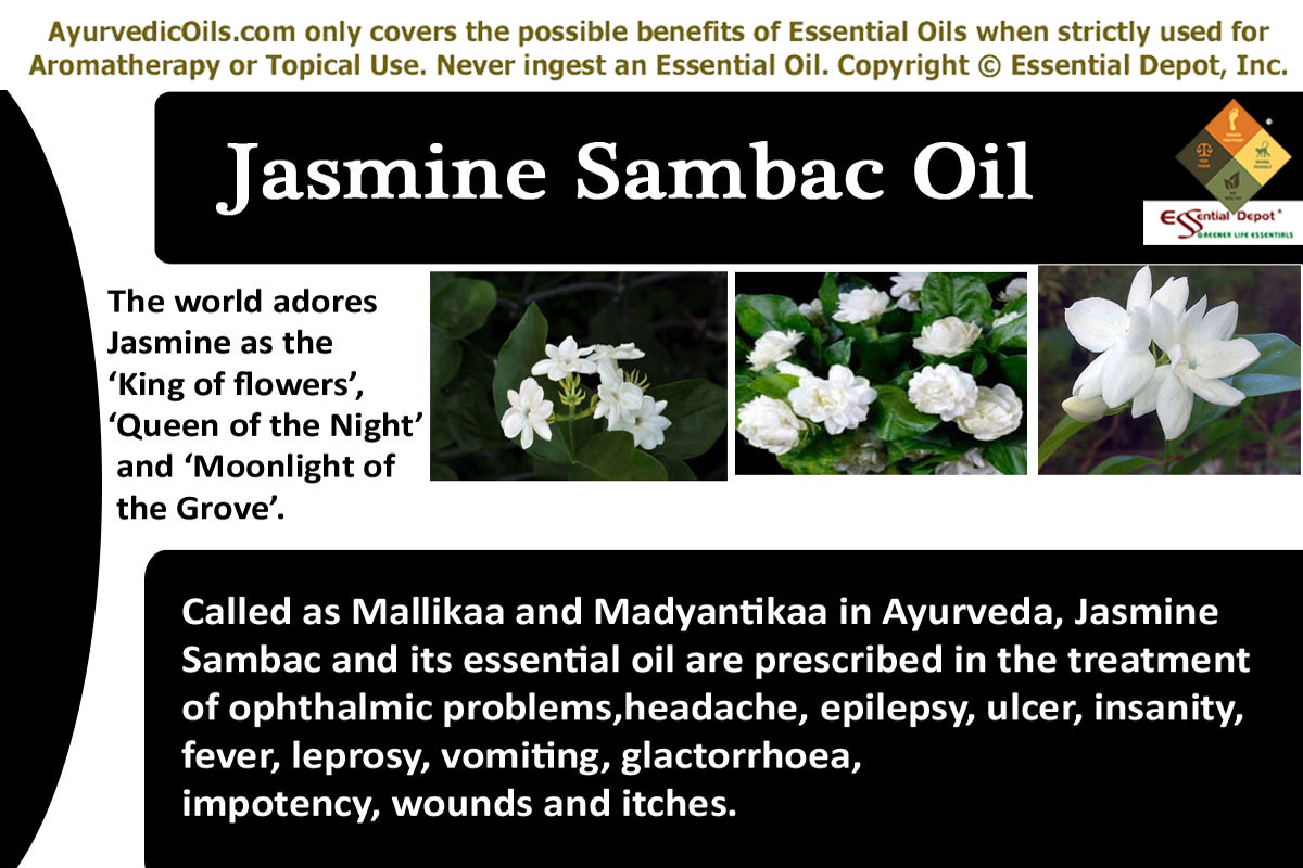 Chemical constituents of jasmine sambac oil essential oil jasmine sambac banner izmirmasajfo