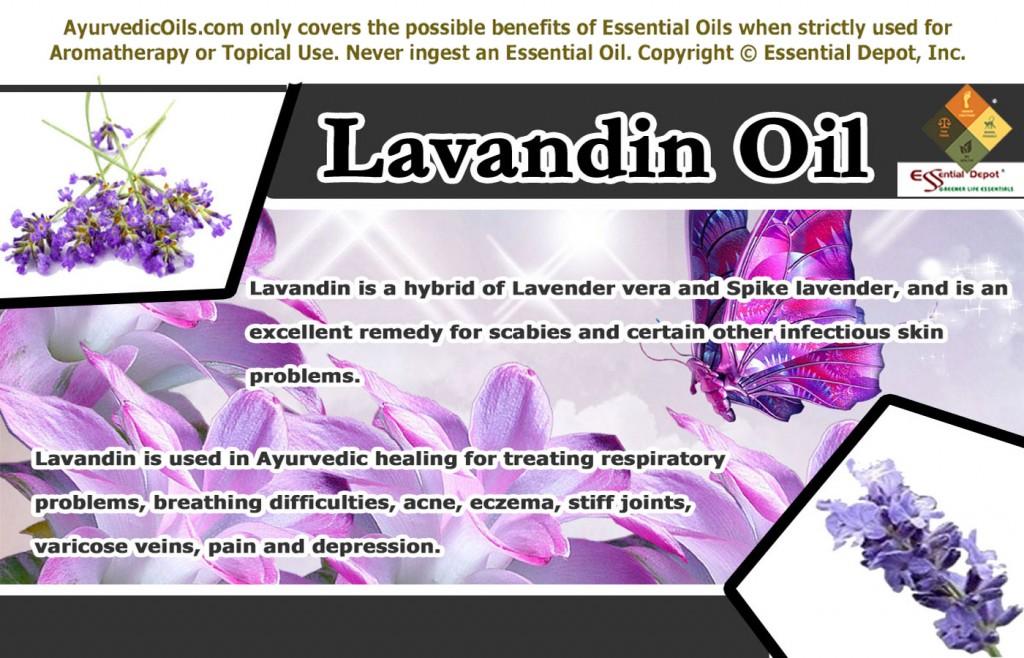 Lavendin-banner