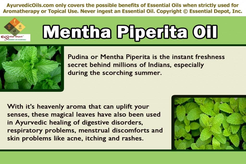 Mentha-pepperita-banner