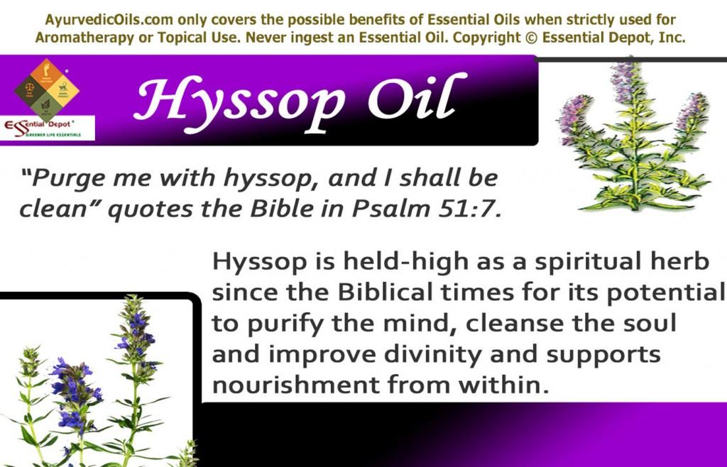 hyssop-banner