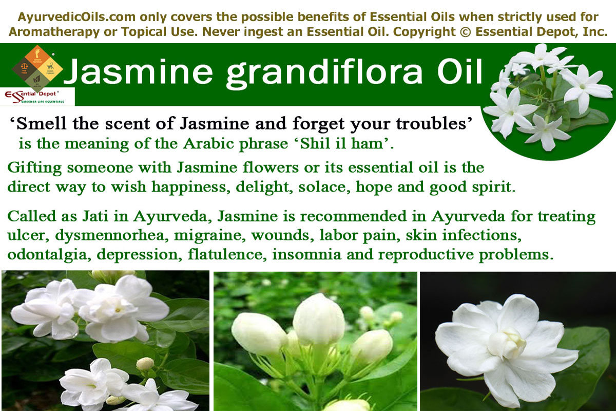 Ayurvedic health benefits of jasmine grandiflora oil essential oil admired for its absolute elegance and transfixing fragrance jasmine is always the sweetest and the most valuable flower in the garden of nature izmirmasajfo