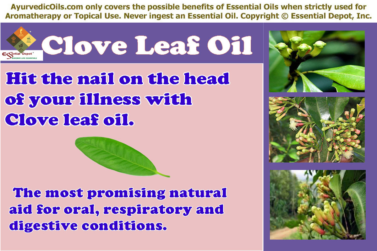 6 health benefits of Clove leaf oil | Essential Oil