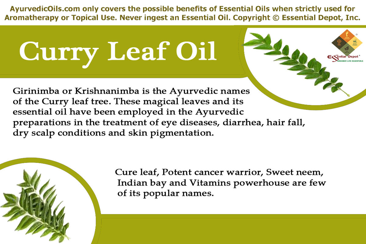 Therapeutic properties of Curry leaf oil | Essential Oil