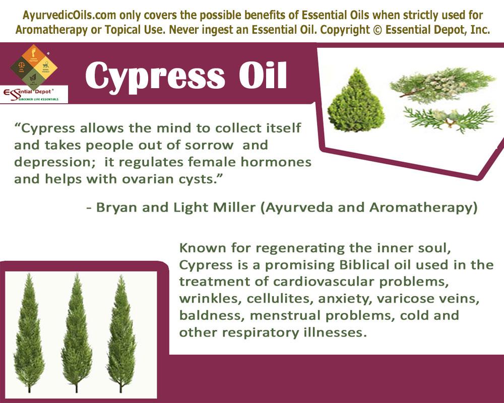 Cypress-banner