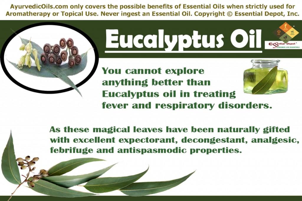 Eucalyptus-oil-banner
