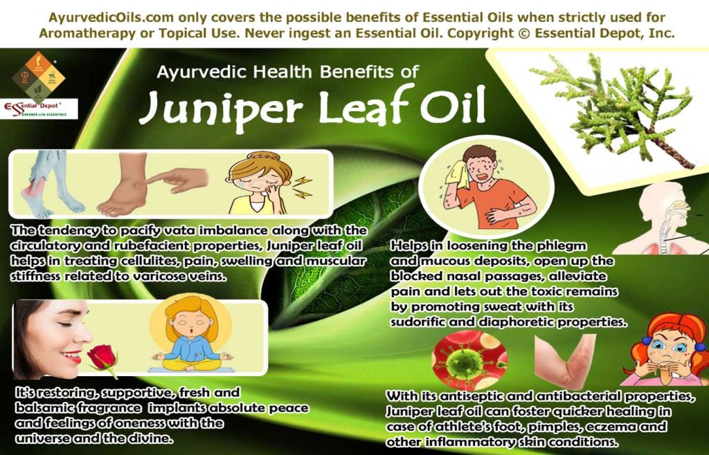 Juniper-leaf-broucher