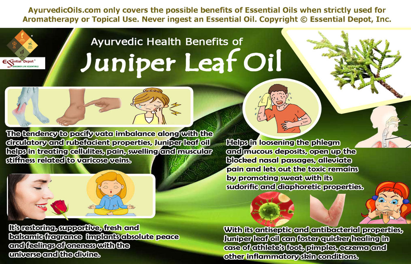 Juniper ordinary: photo, application in medicine 10
