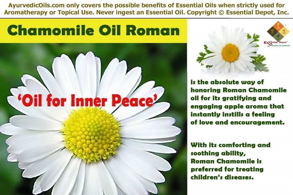 roman-chamomile-bnner