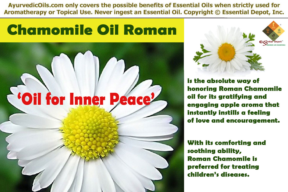 The most unusual ways to use chamomile 69