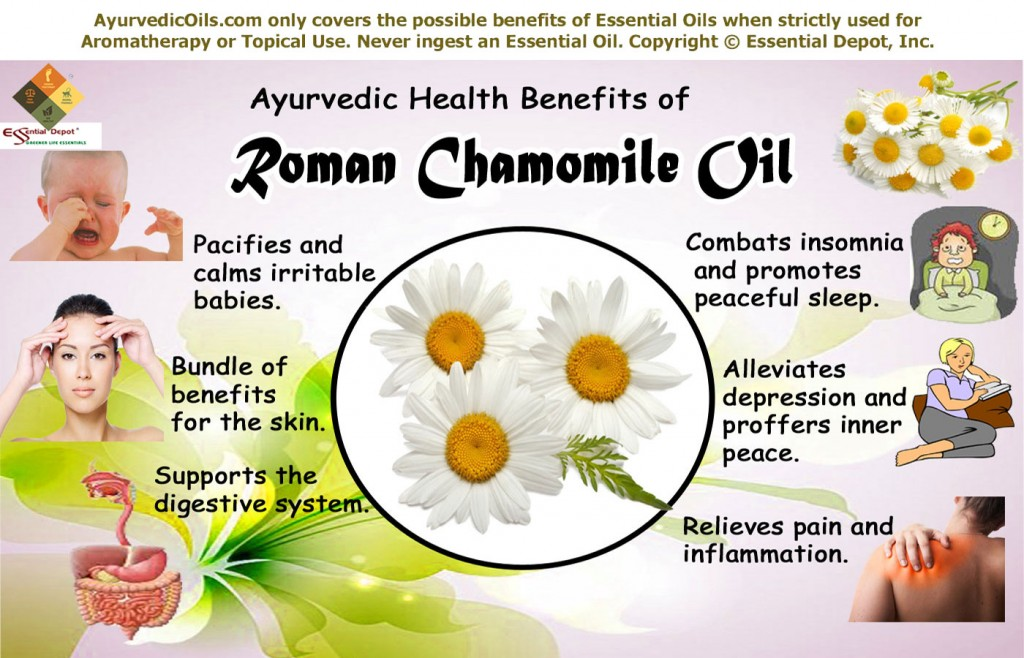 Roman Chamomile Essential Oil Essential Oil