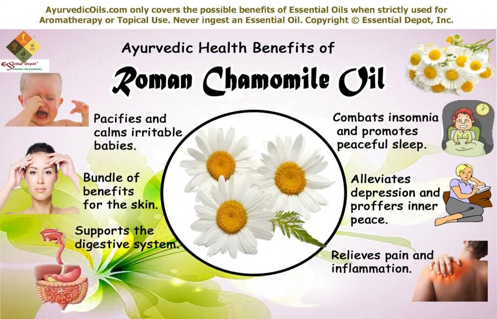 roman-chamomile-broucher-in
