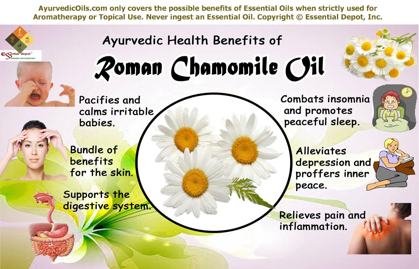 Anthemis Nobilis Essential Oil