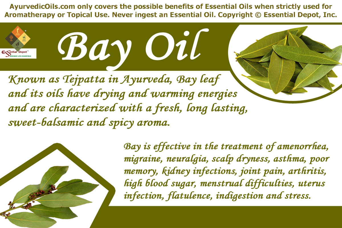 Therapeutic properties of Bay leaf essential oil | Essential Oil