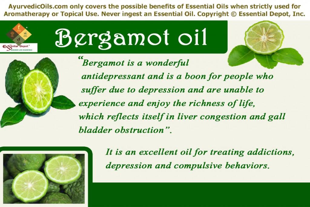 Bergamot-banner