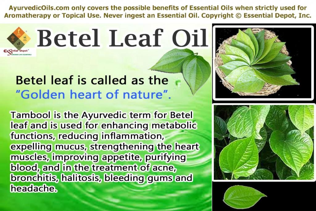 Betel-leaf-banner