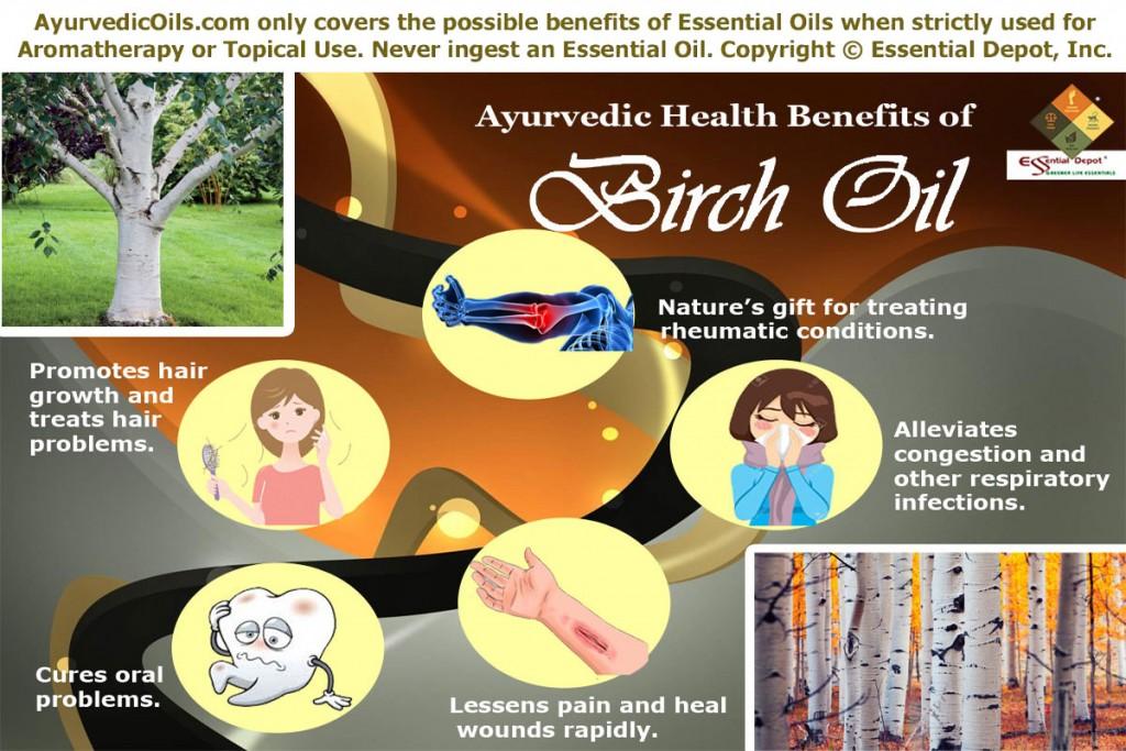 Birch-broucher
