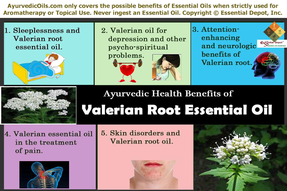 Ayurvedic health benefits of Valerian root oil | Essential Oil