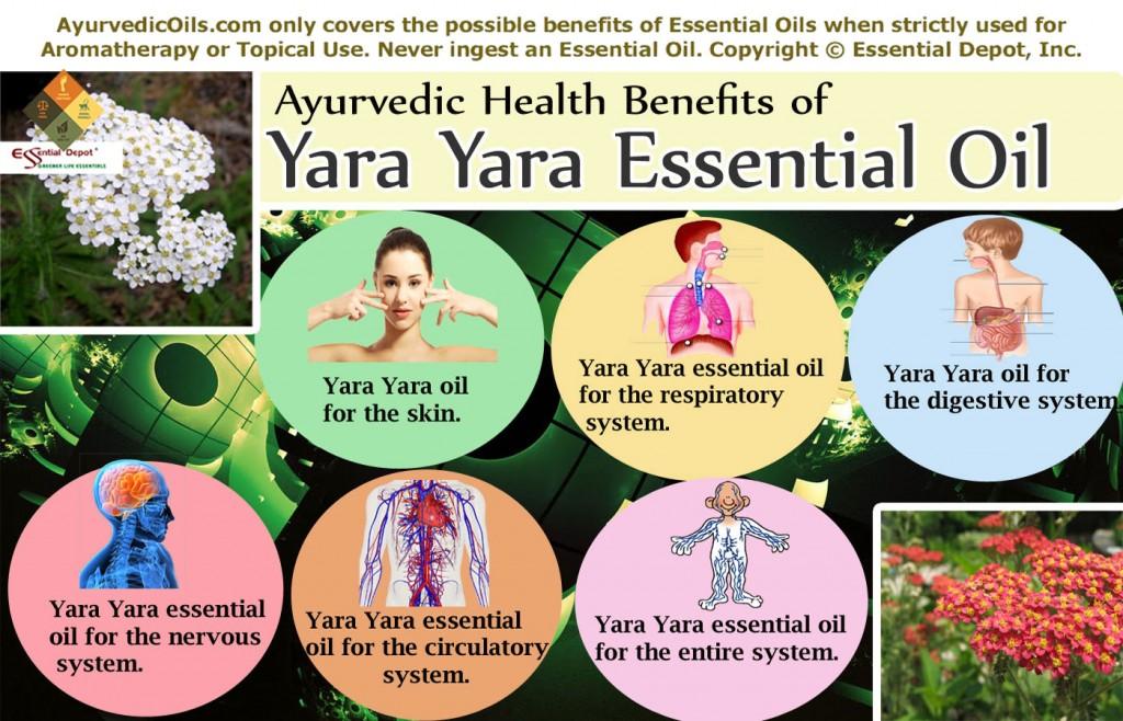 Yara-yara-broucher