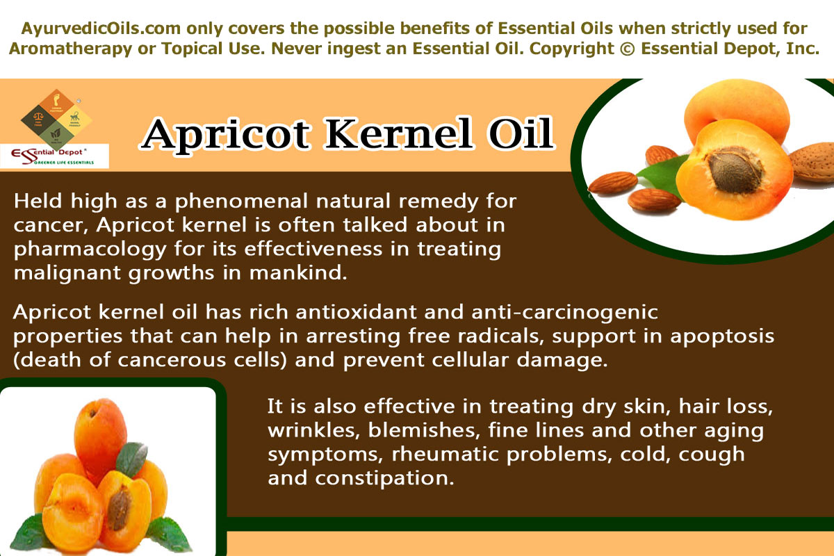 Apricot stone: the benefits and harm. Properties of apricot pits 40
