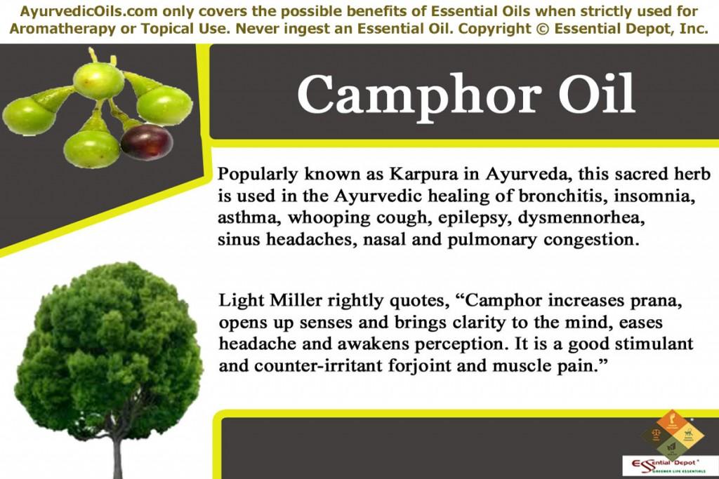 camphor-banner