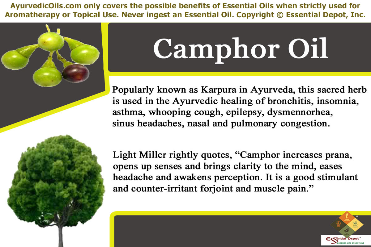 Uses of Camphor oil | Essential Oil