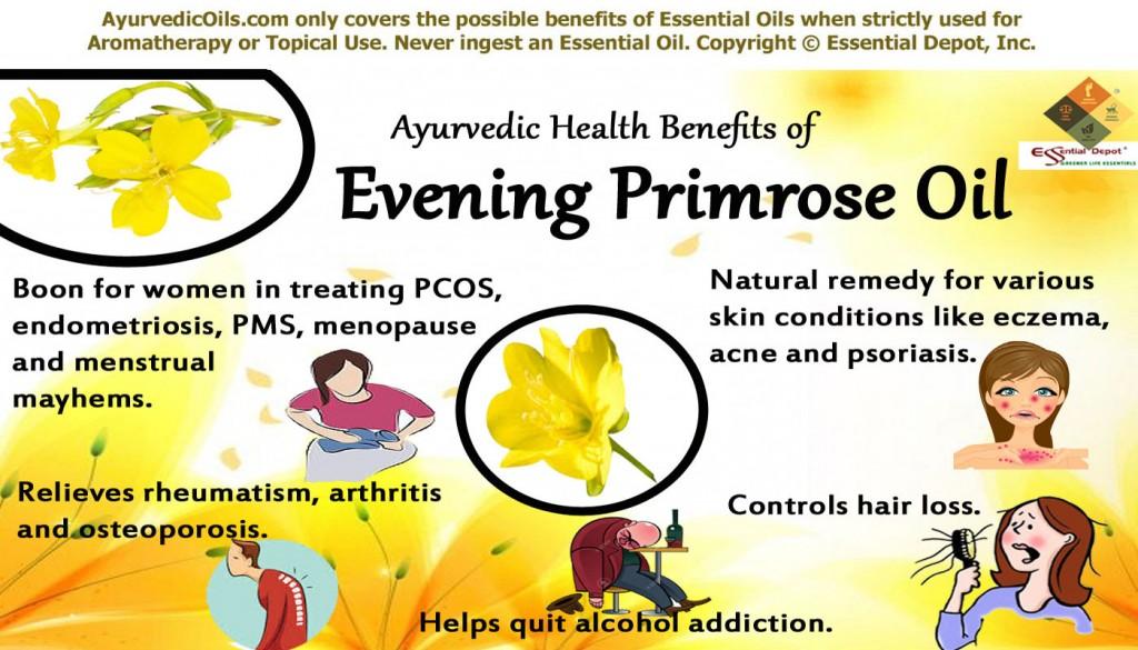 Evening primrose broucher