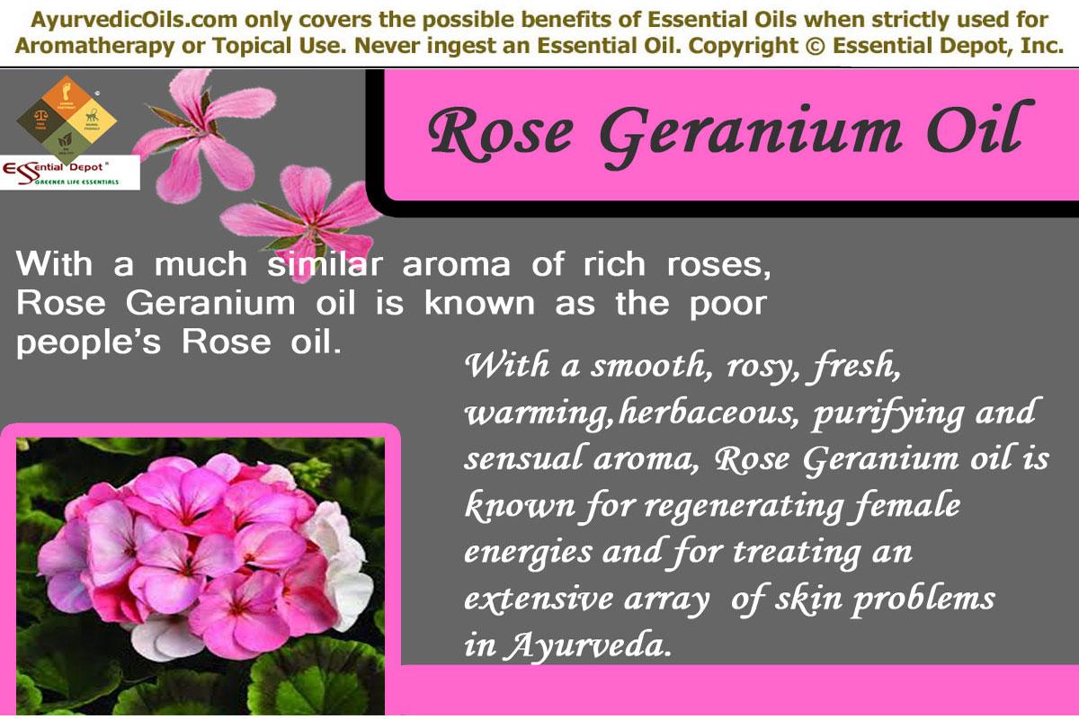 Rose Geranium Essential Oil Essential Oil